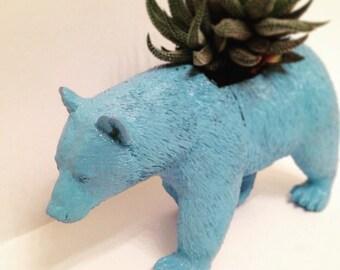 Boris the Bear cactus planter