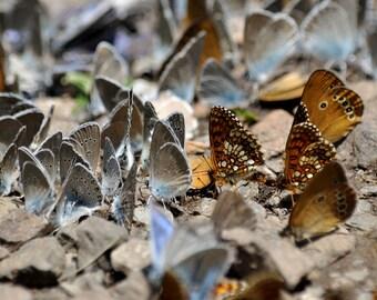 butterfly - digital photograph - nature photograph - summer - art - soft focus