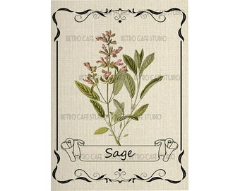 Digital Download Framed Sage Herb Illustration Transfer Clip Art; 1068