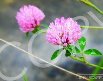 Pink Neutral Flower Photograph