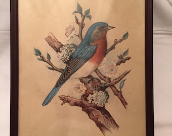 FREE SHIPPING Bluebird framed lithogragh  USA