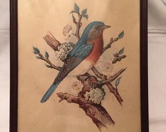 Bluebird framed lithogragh  USA