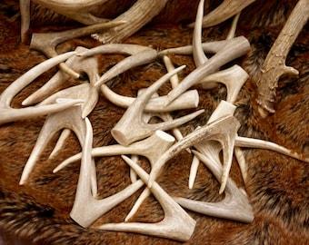 "Medium Deer Antler Forks: 4"" - 5.5"" long Naturally Shed Deer Antlers Forks, Furniture, Tribal, Jewelry, Crafts, Deer Tines"