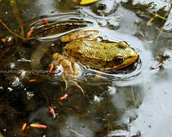 Nature Photography, Frog Pond, Macro Photography, Fine Art Photography, Nature Prints, Animal Photography, Amphibian Photograph