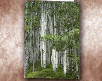 Delicate Aspens Greeting Card. Near Ridgeway and Ouray, Colorado.