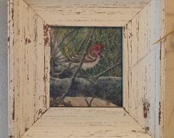 watercolor bird framed