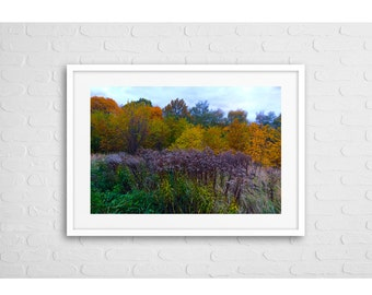 Autumn Colours Art Photo With Frame