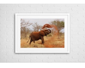 Elephant Sand Bath Art Photo With Frame