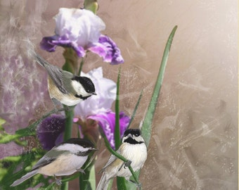 "IRIS CHICKADEES-  A Digital print on streched Canvas measuring 10"" x 13""."