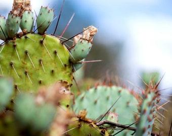Cactus Print, Prickly Pear, Desert Photography, Wall Art,