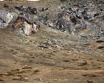 Chamois | Grey Brown Rocks | Swiss Alps | Fine Art Photography | Zermatt | polychromatophil | Mountain | Photo