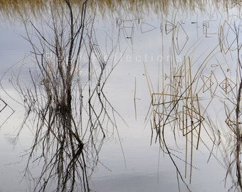 Reed Reflections #24