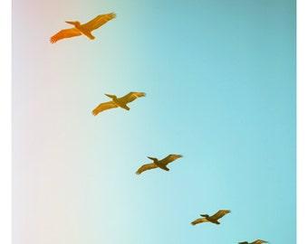Nature Photograph - Pelican Art - Updraft - Bird Art - Bird Print - Fine Art Photograph - Animal Art - Nautical Decor - North Carolina Art