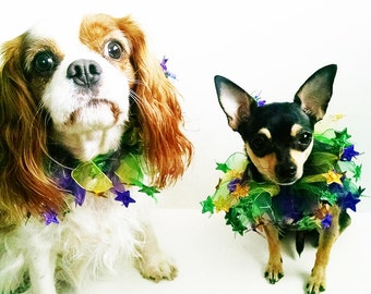 Pet Collar Decorative Festive tulle and stars collar mardi gras 2017  Chihuahua ckc spaniel yorkie dog clothes Instagram photo prop