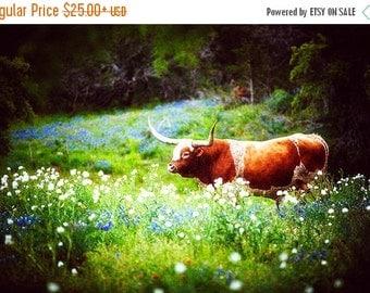 Summer Sale - Texas Longhorn Photography, Bluebonnets Photo, Springtime, Farm, Longhorns, Rural, Cowboy, Old West, Cattle, Animal, Texan, Ra