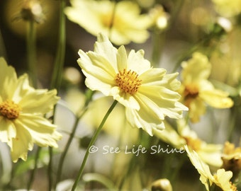 Yellow Daisy Photo, Digital Print, Bedroom Decor, Digital Download, yellow, Instant Download Photography, gold, Bedroom Wall Art
