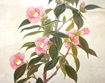 Japanese Print - Vintage Print -  Camellia Print - Vintage Flower Print Japanese Magazine Cut Out