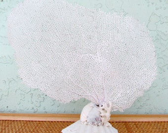 Sea Fan,White Seafan with Base, Natural Bahama Seafan Coral,Coastal Beach Decor, Sea Fan with Stand,Stand Alone White Seafan