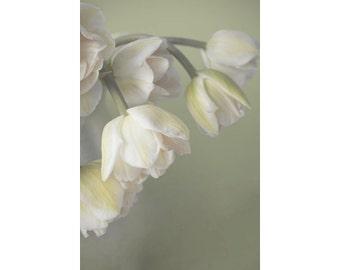 Yellow Tulip Art,  Still Life Photography.  Flower Wall Decor,  French Country Decor, Tulip Photo, Neutral Art