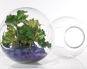 Airway Terrarium