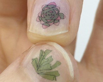Succulent plant nail transfers - plant nail art - handmade illustrated nail decals - house plant nails