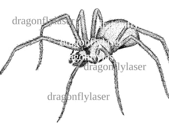 Digital stamp- Pen and ink drawing of a spider digital image, hand drawn
