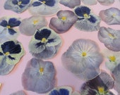 Choose your Pansies Grown in Alaska over 25 Real Pressed Flowers Preserved and Dried 218 FL