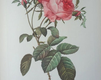 Roses 1954 Vintage Print Pierre Joseph Redoute #10 - Cottage Chic - EnglishPreserves