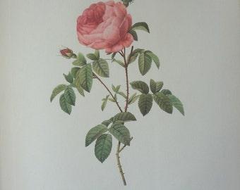 Roses 1954 Vintage Print Pierre Joseph Redoute #22 - Cottage Chic - EnglishPreserves