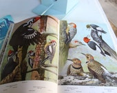 A Natural History of American Birds  -1955  by Forbush & May - Hardcover with dust jacket, 97 full color plates