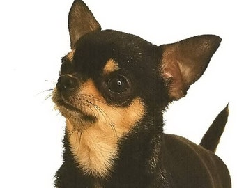 """CHIHUAHUA  (BLACK) SMOOTH  Dog Head on One 16 inch Square Fabric Panel for Sewing. Actual picture is 8"""" x 8"""" on white background."""