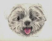 Riley Maltese Print