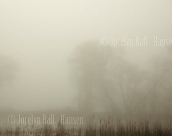Ghostly Trees in Foggy Marsh, Extreme Heavy Fog, Monochromatic Fine Art Landscape Photo, Moody Wall Art