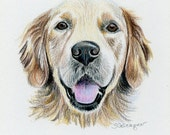 TWO colored pencil pet portraits size 14 x 14 inches each