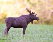 Felt Moose Sculpture - Needle Felted Moose - Needle Felted Animal - Soft Sculpture - Felt Animal - Romney Wool - Moose Decor - Cabin Décor