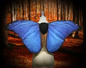 Blue Morpho Butterfly Costume Wings for Halloween, Butterfly Wings, Costume