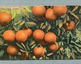 Vintage Postcard, Vibrant Golden Florida Oranges, oranges orchard, fruit postcard