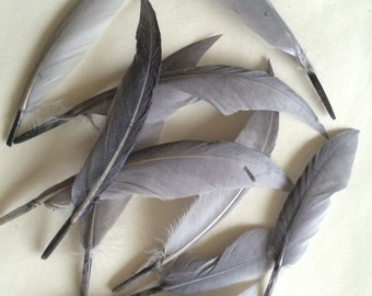LOOSE  BABY DUCK  Feathers,   Platinum Grey  /  2058