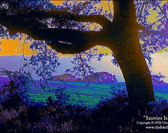 Impressionist Landscape, THE OLD OAK, Sauvies Island, Oregon, Clyde Keller Photo, Fine Art Print,  Color, Signed, Treasury
