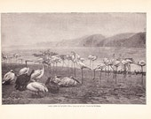 1897 Bird Print - Birds of Egypt - Vintage Antique Art Print History Geography Great for Framing 100 Years Old