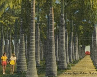 Vintage Postcard of Stately Royal Palms, Florida - Memorabilia