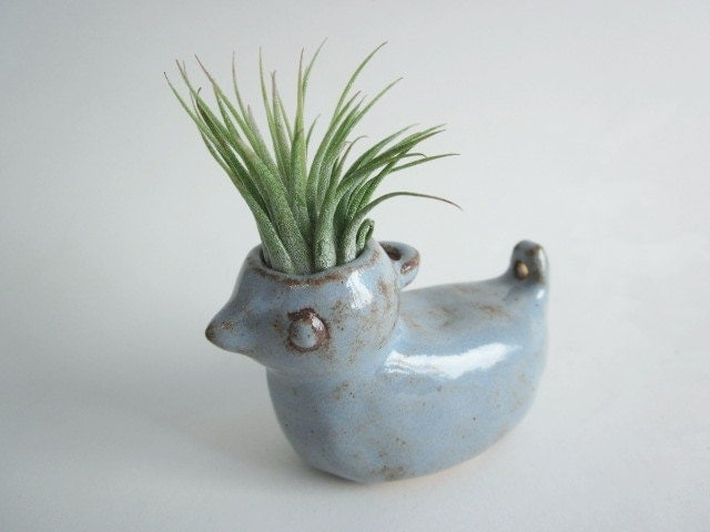 Desk decor air plant planter bird planter cubicle decor - Cubicle planters ...