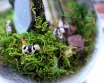 Terrarium in a Glass Pitcher-Lava rocks-tiny cows-Princess pine trees-Preserved moss NO WATER needed