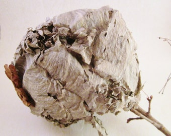 Paper Wasp Nest, Bee's Nest, Bee Hive, Hornet Nest, Nature Art Craft Supply, Insect Studies, Rustic Decor, Science Supply, Papermaking