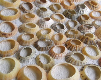 45 Sea Shells Natural Holes Large Hole Jewelry Art Mosaic Craft Supplies (1725)
