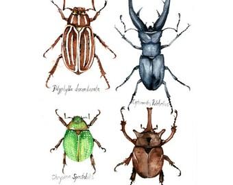 Beetles - Original Watercolor Painting