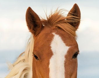 Horse Eye Photograph - 11x14 Color or Black and White Horse Photography Print
