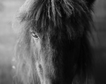 Photograph 8x12 horse black and white fine art archival print