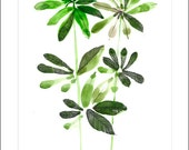 Plant  leaf print watercolour art decor home ink graphic poster nature
