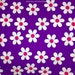 Daisy Fabric, Indian Block Print Fabric, Floral Print Fabric, Broadcloth Fabric, Violet Large Floral Design Fabric, Indian Cotton Fabrics